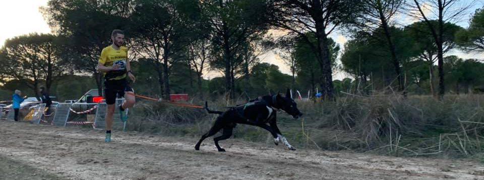 I Campeonato de Castilla y León Mushing Tierra